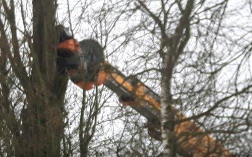 Allbach Fällbach kraan bezig met zagen van 35 m. hoge populieren (i.o.v. Mensink Bosbouw). Geplaatst door roscho op 21-02-2021 om 19:31:35, op TractorFan.nl - de nummer 1 tractor foto website.