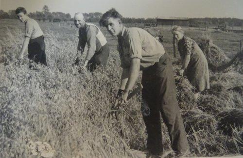 Foto van een oude doos Graanoogst. Haver oogsten in 1941 of 1942. V.l.n.r. Mijn oom Gerrit, Mijn opa Herman, Adriaan (de knecht), Dina (de dienstmeid).
