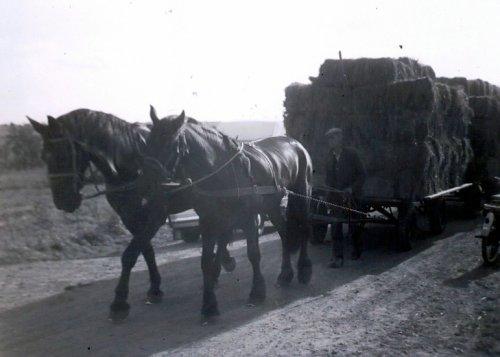 oude doos paard en wagen van basia