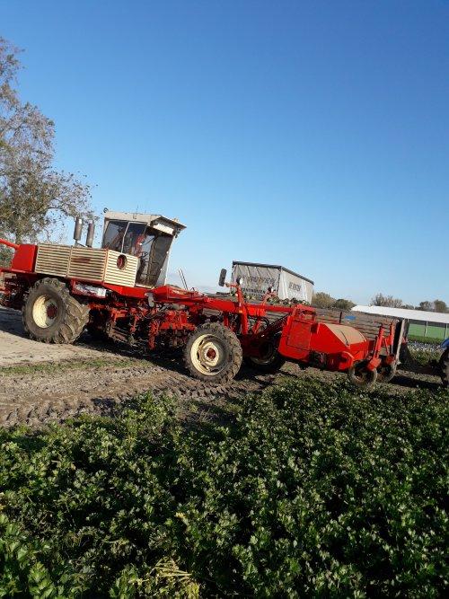 Afgelopen week de eerste knolselderij voor de bewaring gerooid. Geplaatst door t6030power op 02-11-2019 om 20:01:20, op TractorFan.nl - de nummer 1 tractor foto website.