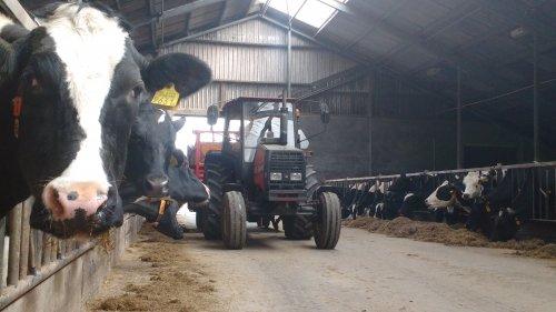 De valmet 405 druk aan het voeren. Geplaatst door appievaltra op 16-04-2016 om 16:02:16, op TractorFan.nl - de nummer 1 tractor foto website.