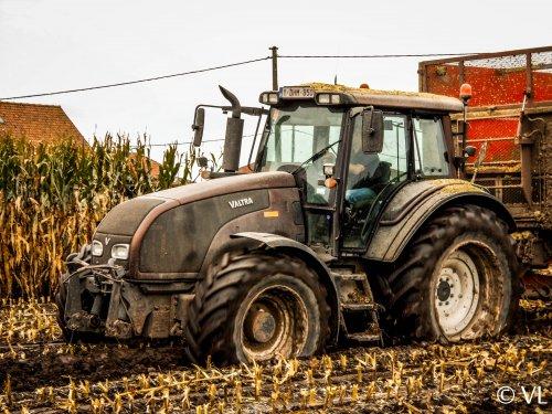 Foto van een Valtra T191, bezig met maïs hakselen. Loonwerken Quintyn BVBA uit Wingene (B). Geplaatst door victor deutz op 03-01-2014 om 19:23:41, op TractorFan.nl - de nummer 1 tractor foto website.