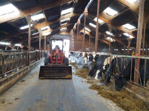 Foto van een Venieri Shovel. Op de foto met de laatste koeien die op het bedrijf lopen. Morgen worden ze verhuisd in oostenlijke richting.