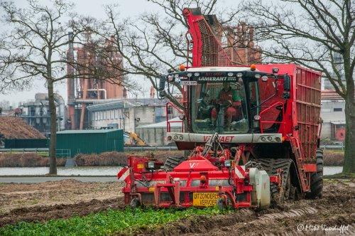 Stilaan moeten de gewassen uit de grond, dus vettig of niet, gerooid zal er worden! Vervaet Beet Eater 617 Loonbedrijf Lamerant - Merken (B)