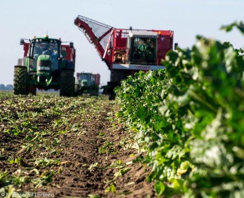 Foto van een Vervaet Bietenrooier, bezig met bieten rooien in de polder. Er naast een John Deere 7430 & beco kipper, er achter een John Deere 6620.
