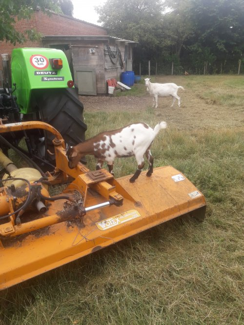 De geitjes kunnen de tuin moeilijk baas,dus heb ik ze een beetje geholpen vandaag.. Geplaatst door stijn-de-bock op 01-08-2019 om 16:47:48, met 3 reacties.