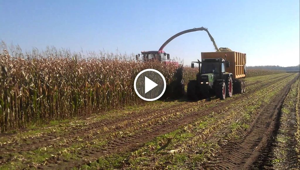 Wideo Case IH Mammoth 8790