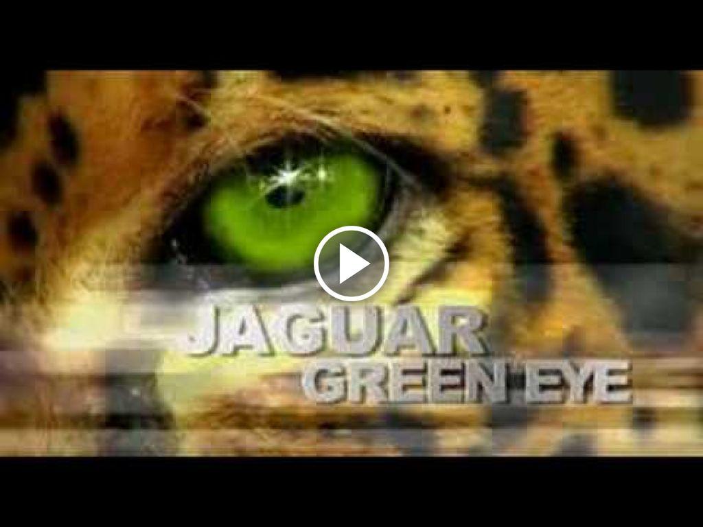 Video Claas Jaguar 900 greeneye