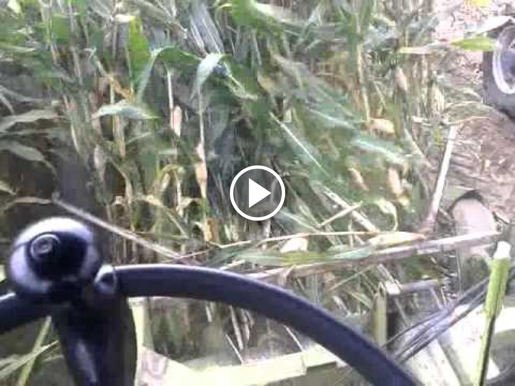 Video Claas Jaguar 80 SF