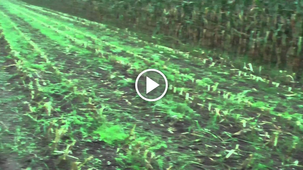 Video Claas Jaguar 890