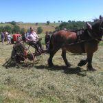 oude doos paard en wagen